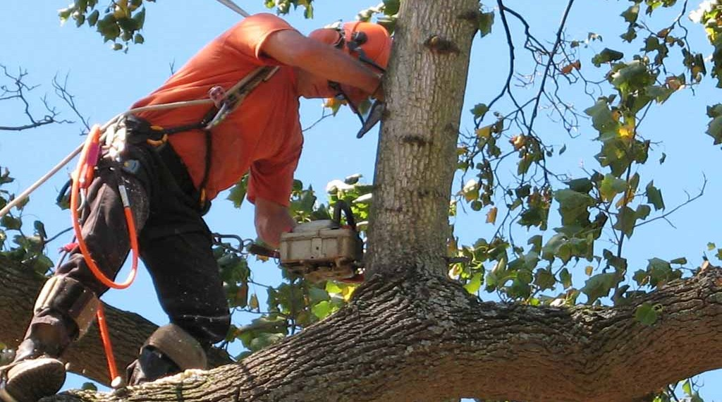 Reasons For Hiring Professional Tree Removal Service