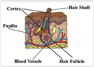 Expert Saying: Hair Follicle Drug Testing