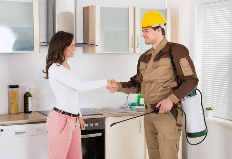 What Should You Consider When Looking For And Hiring A Pest Control Company In Brentwood?