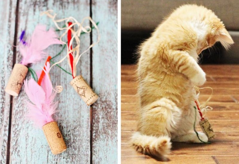 11 Gifts ideas that will Make any Kitty Lover Go Crazy with delight