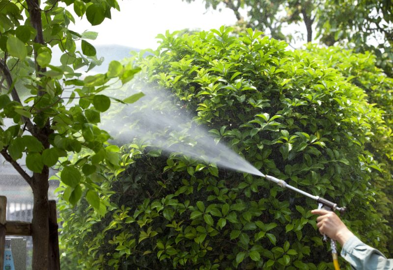 Common Practices (and myths) For Repelling And Preventing Pests In Your Home