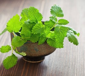 6 Reasons To Grow Mint At Home