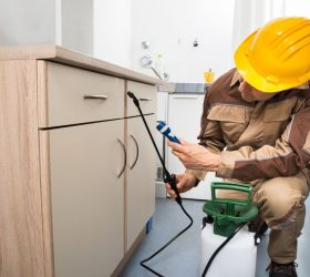 Safe And Reliable Pest Control Services In Essex