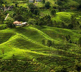 The Joy Of Exploring Sri Lanka Alone