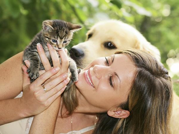 Pet Memorial Stones: In The Memory Of Your Beloved Pet