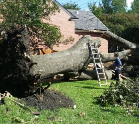 What Are The Types Of Professional Tree Removal?